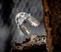 birdsfeb19-4