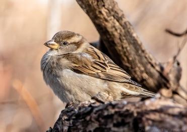 birdsfeb19