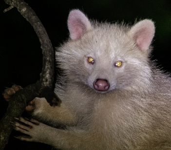 albinos-3