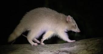 albinos-6