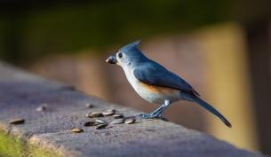 skiesbirds0320-10