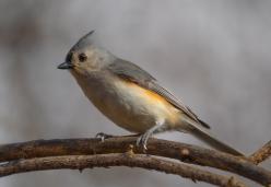 skiesbirds0320-6