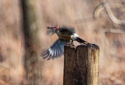skiesbirds0320-7