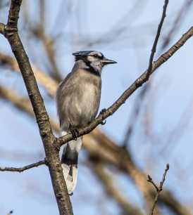 skiesbirds0320-8